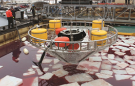 Spilled Oil in Icy